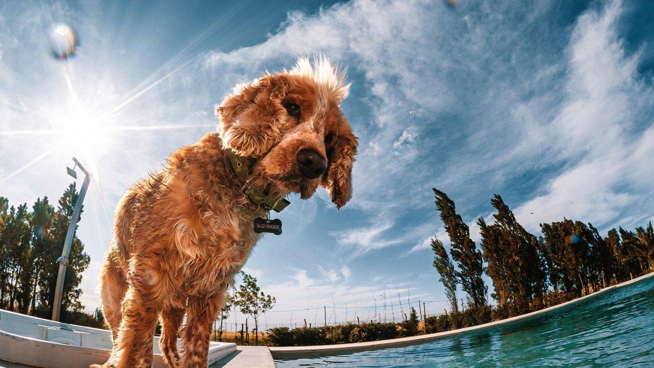 Nova tendência: procura de locais para férias que aceitem animais de estimação